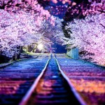 Tunnel of love (ride)