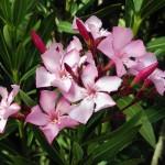 Top 5 Common Poisonous Plants That You Should Never Touch