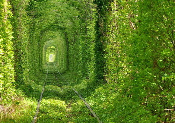 Beautiful_train_Tree_Tunnel_tunnel_of_love
