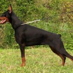 Top 10 Aggressive Dog Breeds In The World