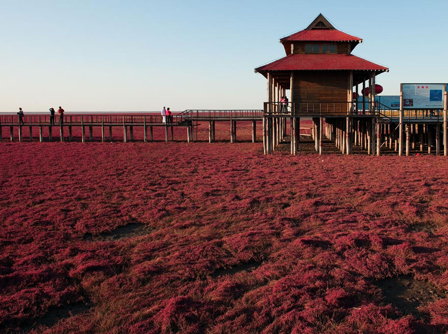 panjin-red-beach-china