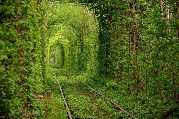 traintreetunnelgreenukraine