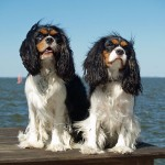 World's Top 10 Most Popular Dog Breeds