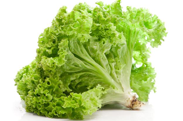Green_Leaf_Lettuce_Garden_of_Eden