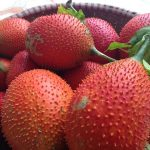 Top 10 Fruits that you never heard of