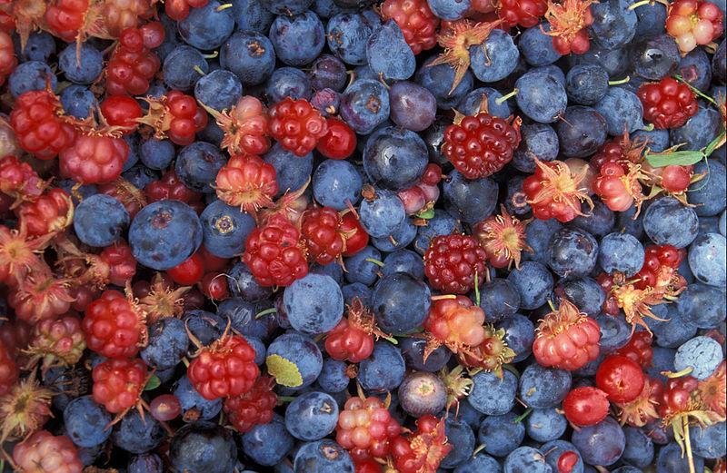 Alaska_wild_berries