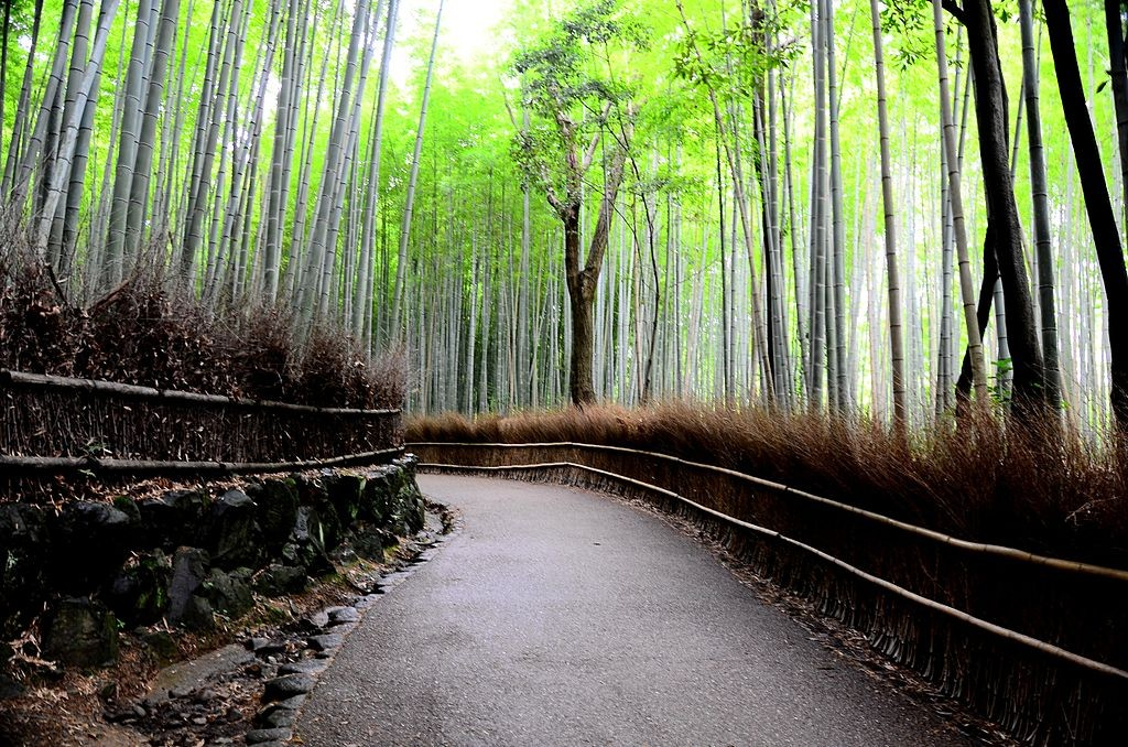 Bamboo_forest_01