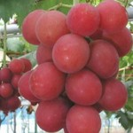 Top Five Most Expensive Fruits In The World