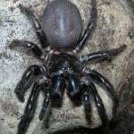 Top 10 Most Dangerous Spiders In The World