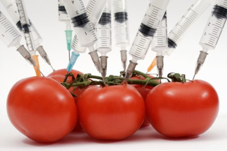 genetically-modified-food-1